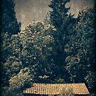 Old cottage by Morten Kristoffersen