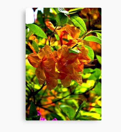 Orange Rhododendron Canvas Print