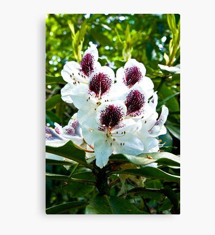 Speckled Rhodie Canvas Print