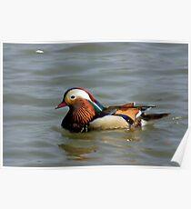 Mandrin Duck Poster