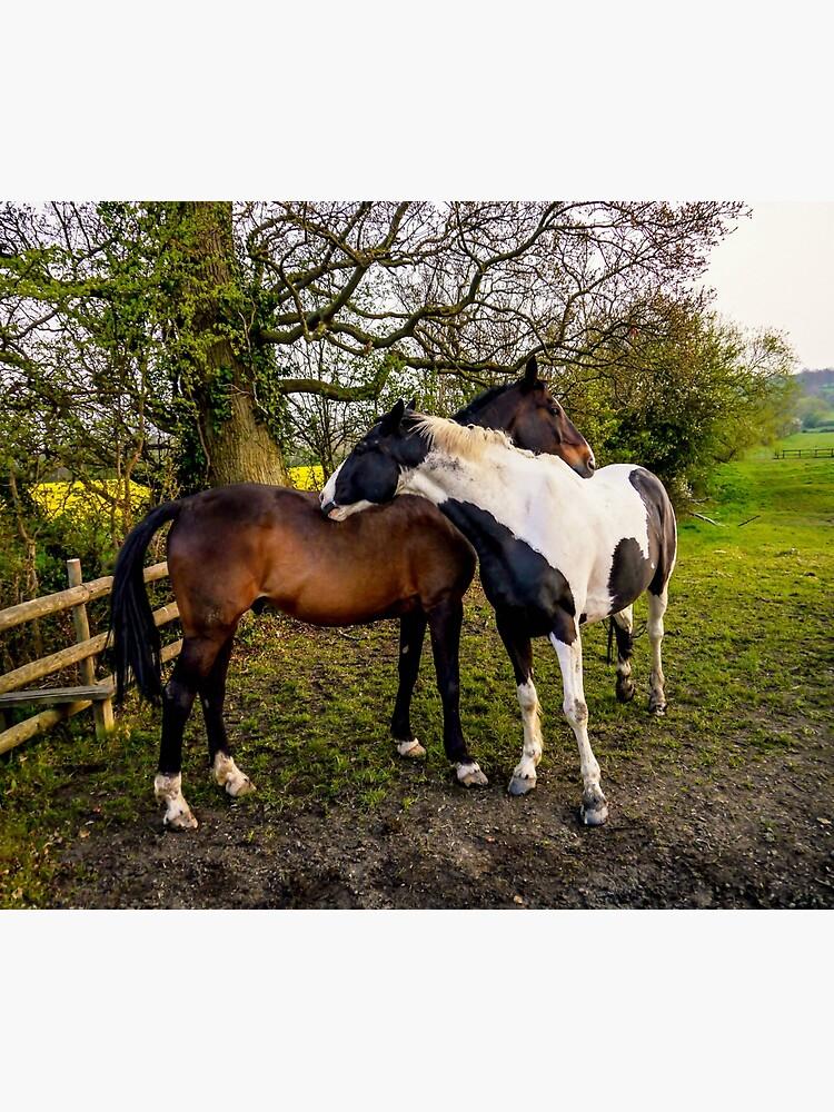 Horse Hug by ScenicViewPics