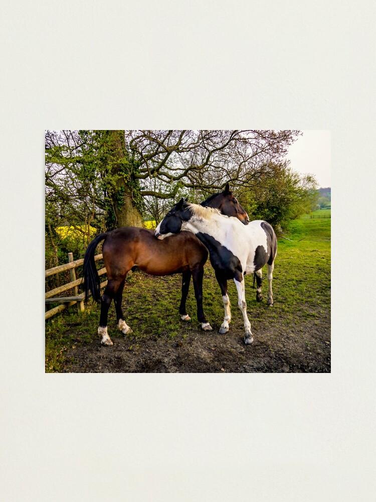Alternate view of Horse Hug Photographic Print