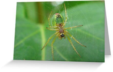 Arachnophobia!! by Sandra Cockayne