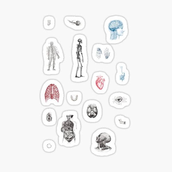 Anatomy Illustrations Vintage Pattern Sticker