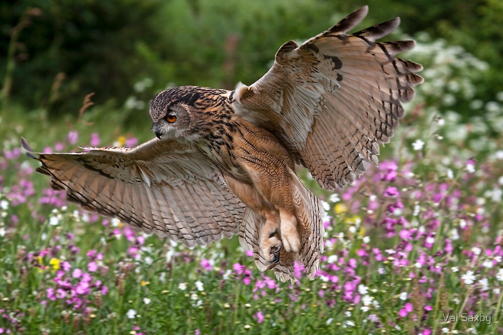 Landing Approach by Val Saxby