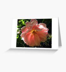 Rose 'Albertine'  Greeting Card