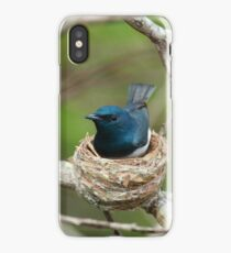 Satin Flycatcher (Male) iPhone Case