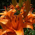 glorious lillies by LisaBeth