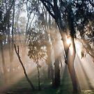 Fog Rays by Lisa  Kenny