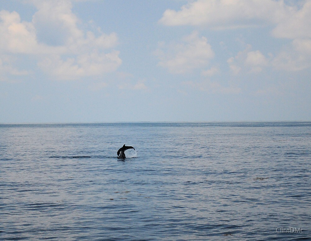 Dolphins entertaining by ClintDMc