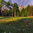 Alpine Meadow by Justin Baer