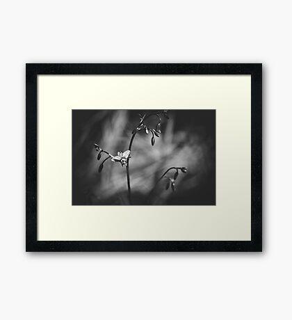 #14 Framed Print
