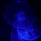 jelly fish by cyanne123