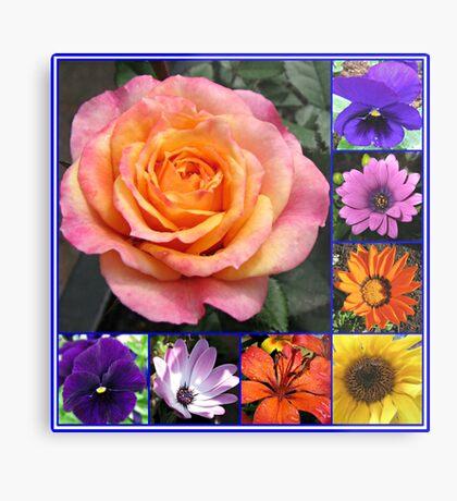 Blumen der Sommer-Collage, die leuchtende Rosen-Schönheit kennzeichnet Metallbild