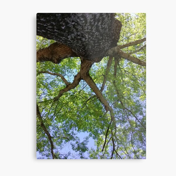 Under the shade Metal Print