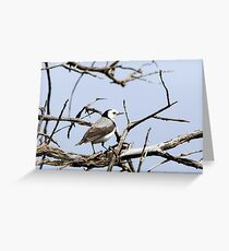 White-fronted Chat Greeting Card