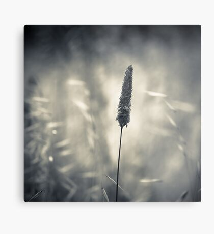 Growing Solo Metal Print