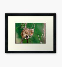 Mini-Mouse Framed Print