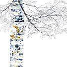 Silver Birch by RochelleMc