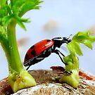 Ladybird Leap! by paintingsheep