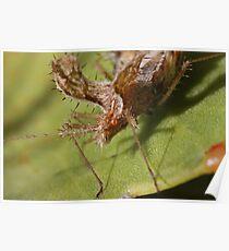 Assassin Bug  Species Pselliopus Barberi  Aguilar Garden ff333ae59e348