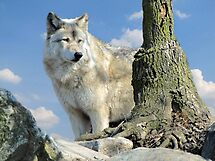 Watching Over the Pack by Veronica Schultz
