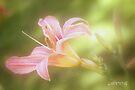 Lily by aMOONy