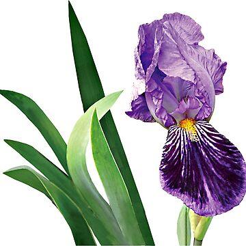 Striped Purple Iris  by SudaP0408