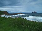 Bass Rock and The Firth of Forth by WatscapePhoto