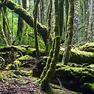 The Enchanted Forrest, Cradle Mountain by Gayan Benedict