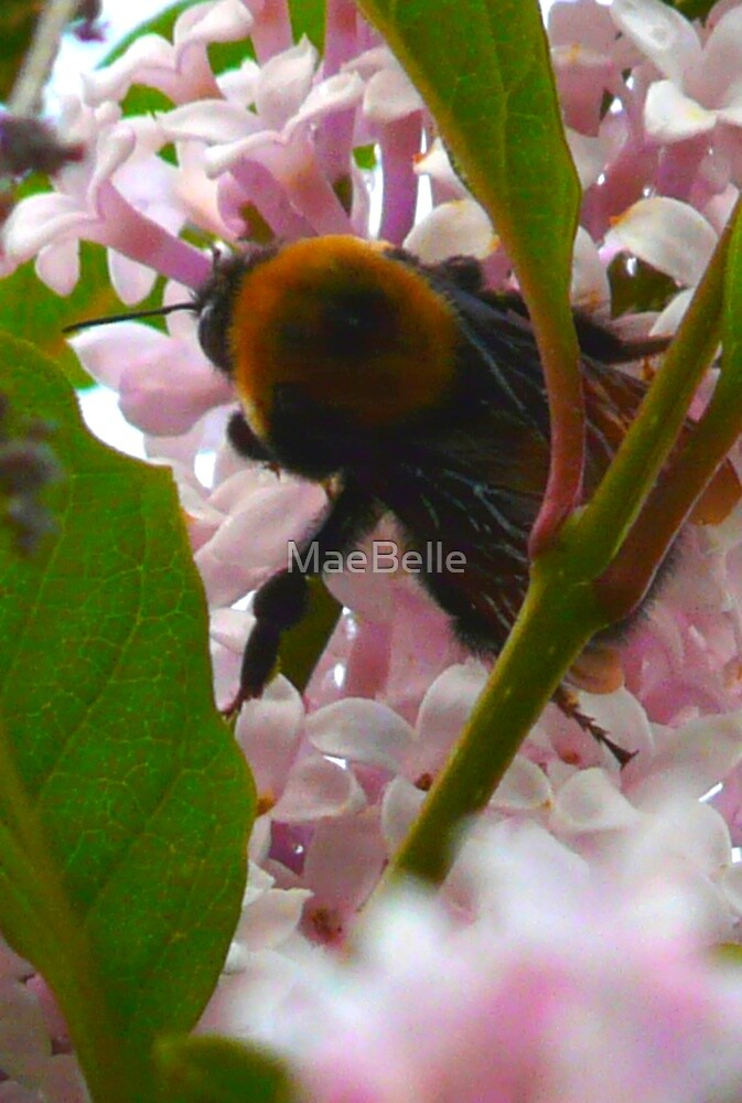 Bee In A Lilac Tree by MaeBelle