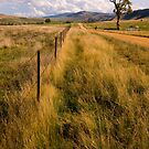 Omeo Track  by bettyb