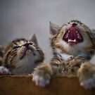 Laughing Cat by XLR8
