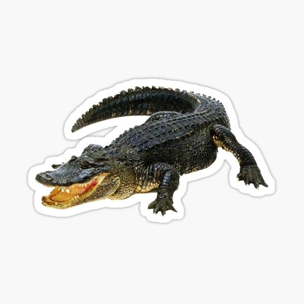 Gator Daze Sticker