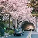 «Sakura pétalos cayendo» de Guillaume Marcotte