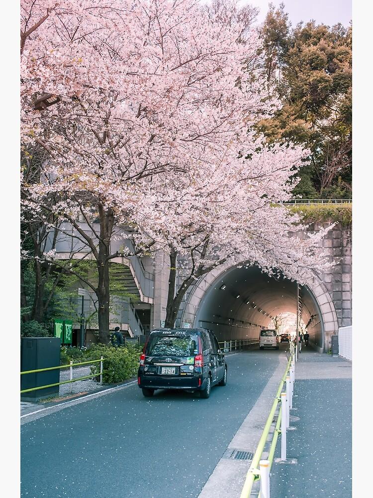 Sakura petals falling by TokyoLuv
