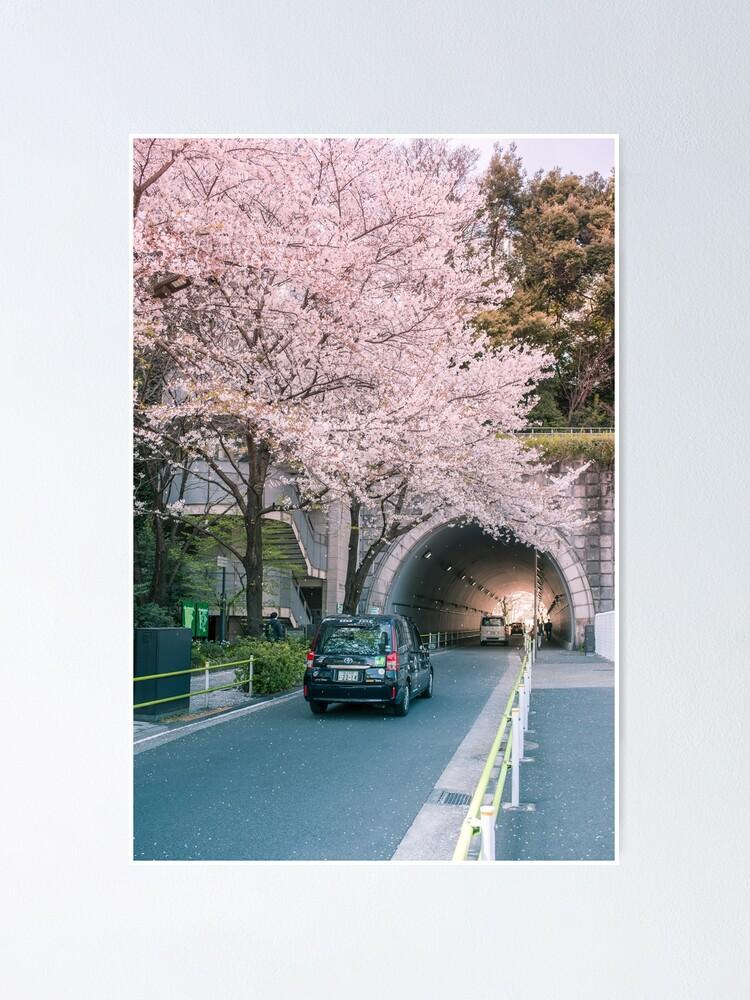 Alternate view of Sakura petals falling Poster