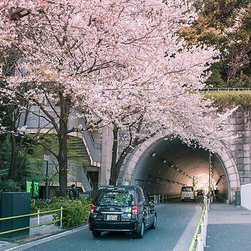 Sakura pétalos cayendo de TokyoLuv