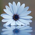Reflect on nature's beauty by Sangeeta