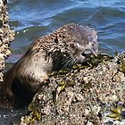 Fluss Otter von Betsy  Seeton