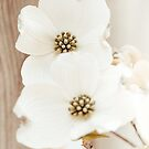 Dogwood Duo by Philippe Sainte-Laudy