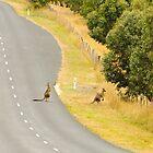 Kängurus überqueren die Straße von Jaime Cifuentes