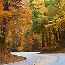 Fall S Curve by kinz4photo