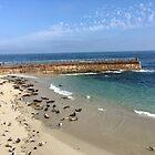 La Jolla Seals and Sea Lions by SavingMemories