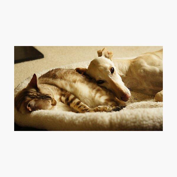 A Soft Cushion Photographic Print