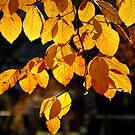 Fall 2009 at Kochelsee. by Daidalos