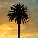 """""""Palm at Sunset"""" by Tim&Paria Sauls"""