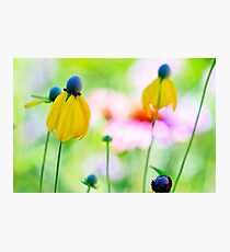 Prairie Wildflowers Photographic Print