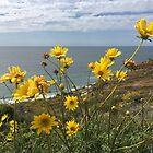 Wildflowers of Torrey Pines by SavingMemories