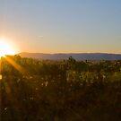Harvest Sunrise by Di Jenkins